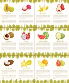 Pomelo and Longan Posters Vector Illustration