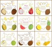 Marang and Jackfruit Posters Vector Illustration