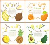 Cupuacu and Kumquat Posters Vector Illustration