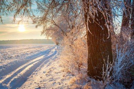 Photo pour Route rurale et arbre enneigé dans la campagne hivernale - image libre de droit