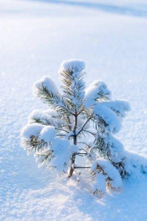 Photo pour Branches givrées couvertes du hoarfrost blanc dans la campagne hivernale - image libre de droit