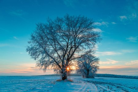 Photo for Rural road and snow-covered trees at sunset in wintry countryside - Royalty Free Image