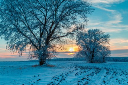 Photo pour Route rurale et arbres enneigés au coucher du soleil dans la campagne hivernale - image libre de droit