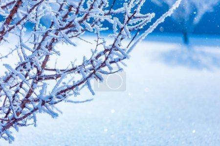 Foto de Ramas heladas cubiertas de hoarfrost blanco en el campo invernal - Imagen libre de derechos