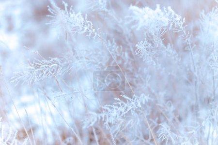 Photo pour Herbe givrée dans le domaine dans la campagne hivernale - image libre de droit