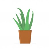 Green aloe vera plant with leaves in brown pot Trendy flat style isolated on white background