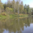 Lake in the forest...