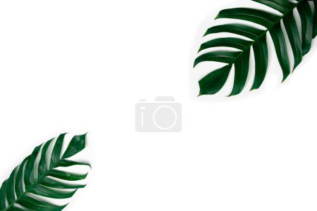 Photo for Green tropical leaves isolated on white background - Royalty Free Image