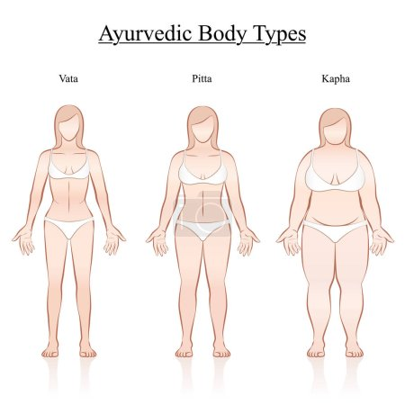 Illustration for Female body constitution types - ayurvedic typology - vata, pitta, kapha. Isolated outline vector illustration of women - frontal view - different anatomy. - Royalty Free Image