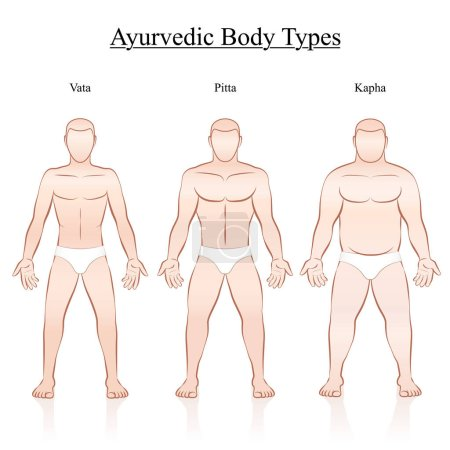 Illustration for Male body constitution types - ayurvedic typology - vata, pitta, kapha. Isolated outline vector illustration of men - frontal view - different anatomy. - Royalty Free Image