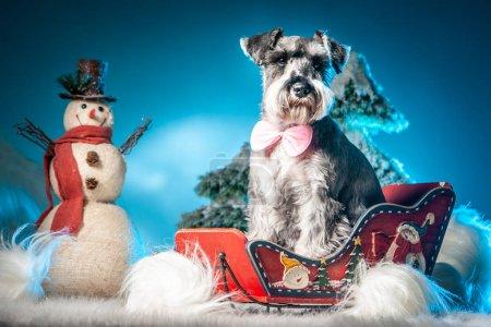 Photo pour Le chien est assis dans des traîneaux. Un chien et un bonhomme de neige. Terrier. Chien dans la neige . - image libre de droit