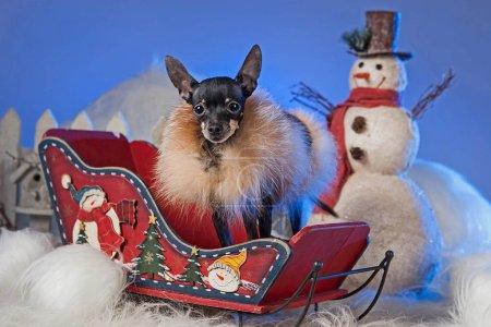 Photo pour Nouvel An. Le chien est assis dans un traîneau. Bonhomme de neige et un chien . - image libre de droit