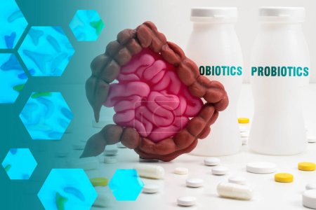Photo for Probiotic bacteria. Useful microorganisms for intestines. Human stomach next to probiotics. Concept - treatment of intestinal diseases. Dietary supplements for the gastrointestinal tract. - Royalty Free Image