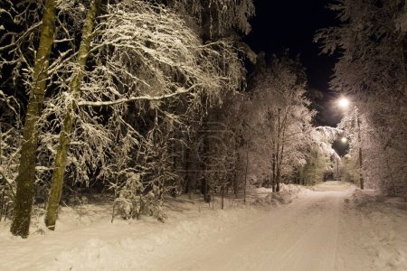 Photo for Winter road. Trees in the snow. Night winter road in the snow. - Royalty Free Image