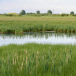 Waterlogged meadows from the river that exited the...
