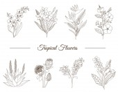 Vector set of tropical flowers isolated on white background