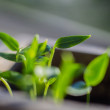 Young shoots of bell pepper have sprung up in a st...