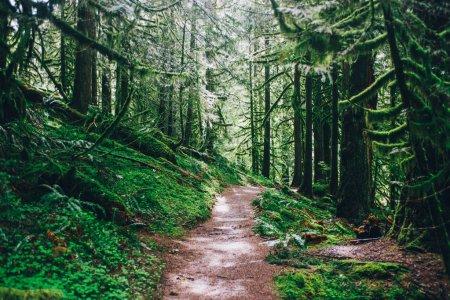 Photo pour Pacific Northwest Randonnée, nature - image libre de droit