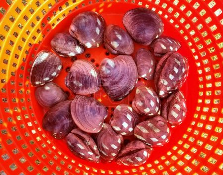 A pile of clams inside a red bucket...