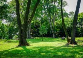 Green garden of public park in Bugis District, Singapore.