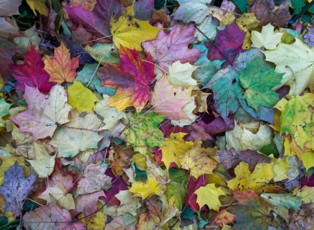 Fallen leaves at autumn