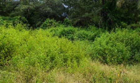 Photo pour Arbres verts à la forêt dans l'île de Lombok, Indonésie. - image libre de droit