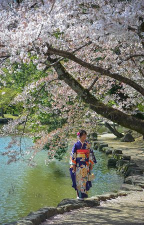 Photo for A young woman in kimono under cherry blossom at Nara Park, Japan. - Royalty Free Image
