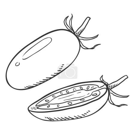 Photo pour Voir Sketch Whole and Half Cut Cherry Tomato - image libre de droit