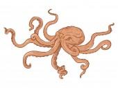 Vector Cartoon Illustration - Red Octopus Wild Underwater Animal