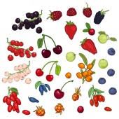Vector Set of Cartoon Berries Different Types and Variations