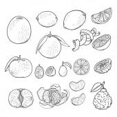 Vector Sketch Set of All Citrus Fruits