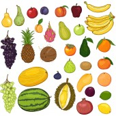 Vector Set of Cartoon Color Fruits