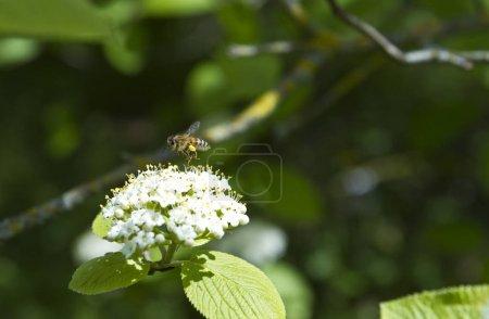Photo pour Belles fleurs blanches poussant dans la forêt le jour ensoleillé - image libre de droit