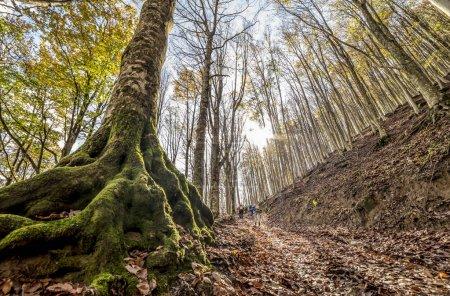 Photo pour Tronc d'arbre recouvert de mousse de forêt - image libre de droit