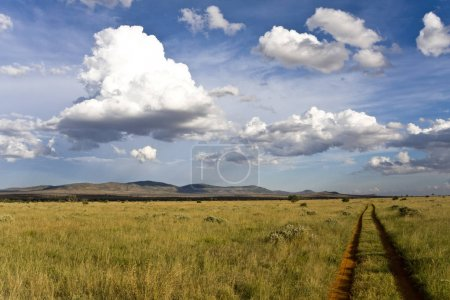 Photo for Dirt road in green field on sunny day - Royalty Free Image