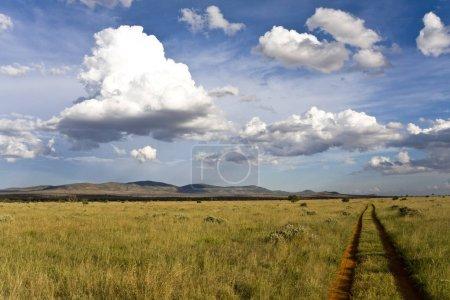 Photo pour Chemin de terre dans le domaine vert le jour ensoleillé - image libre de droit