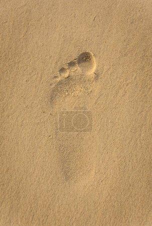 Foto de Huella en la arena, fondo de verano - Imagen libre de derechos