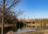 Landscape park with birds and river Dora in Turin