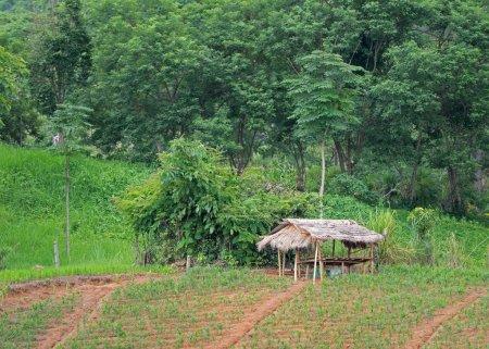 Cabaña de bambú con hojas de palma seca en el techo se encuentran cerca de agr