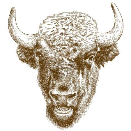 Illustration pour Illustration vectorielle de gravure antique de tête de bison isolée sur fond blanc - image libre de droit