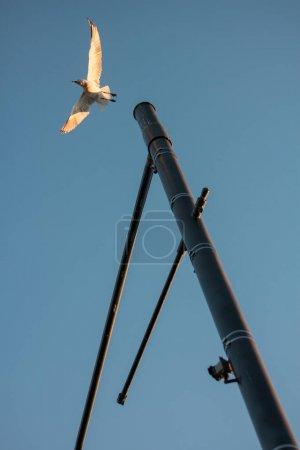 Photo pour Un oiseau s'envole d'un lampadaire près du coucher du soleil été à Perth, Australie . - image libre de droit