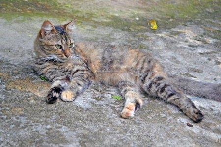 Cute three-colored cat...