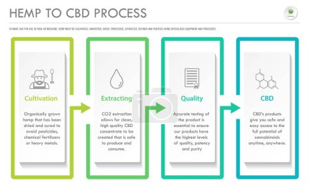 Hemp to CBD Process horizontal business infographi...