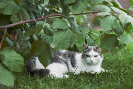 grau erlebt die schöne Katze Unzufriedenheit, wenn sie auf dem Boden sitzt.