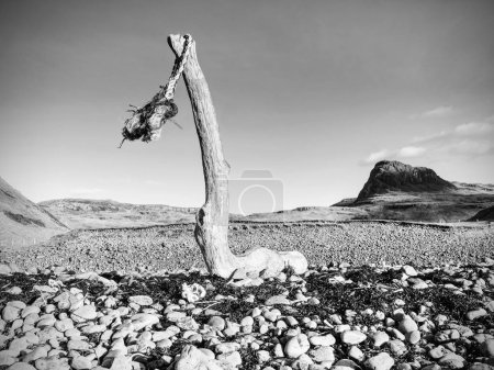 Frayed marine rope drying on an old broken trunk o...