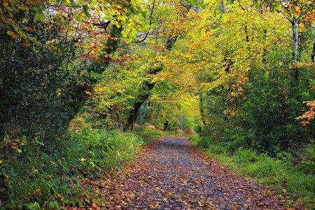 Photo pour Tourmakeady Forest trail, Mayo, Irlande - image libre de droit