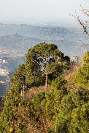 Beautiful jungle on a hill top with blurry mountain range in the