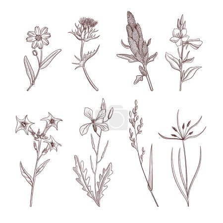 Vector drawing plants, herbs and flowers, which ar...