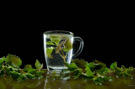 Cup of medicinal nettle tea with nettle leaves and...