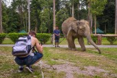 Young boy films an indian elephant